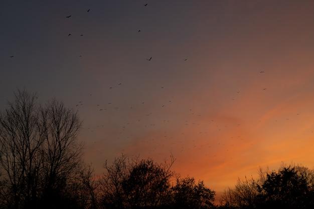 日没時の鳥の群れ