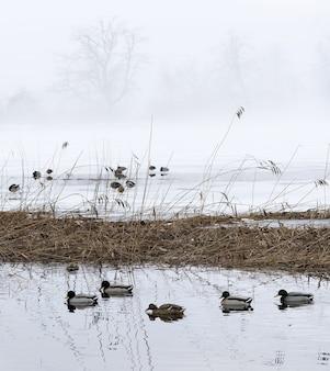 水上の鳥の群れ