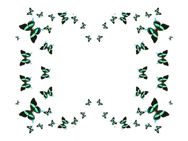 흰색 배경에 고립 된 비행 나비의 무리입니다. 나비의 실루엣입니다. 열대 나방. 열대 곤충. 고품질 사진