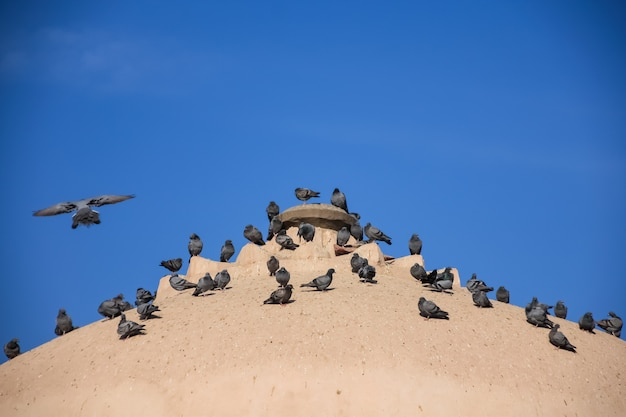 Стая голубей на старой церкви на крыше с голубым небом.