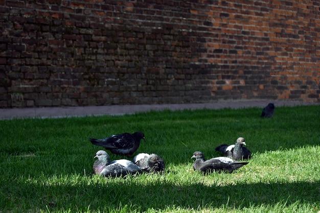 비둘기 떼가 햇볕에 따뜻하다