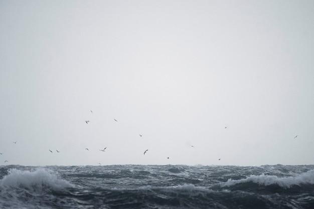 チャンネル諸島、ジャージー島上空を飛ぶカモメの群れ