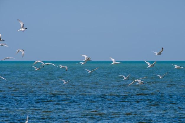 Стая чаек, летящих в безоблачном небе над поверхностью синего моря