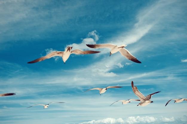 Стая чаек, летающих на голубом небе с птицами на фоне облаков