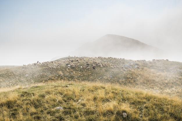ドゥルミトル国立公園の山々にいる羊と羊飼いの群れ