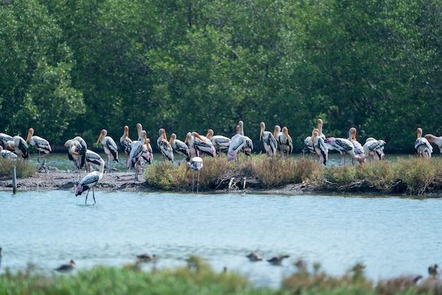 タイの湿地帯に立っているインドトキコウの群れ