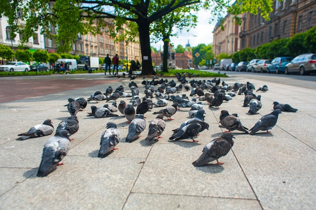 A flock of pigeons graze on the city alley