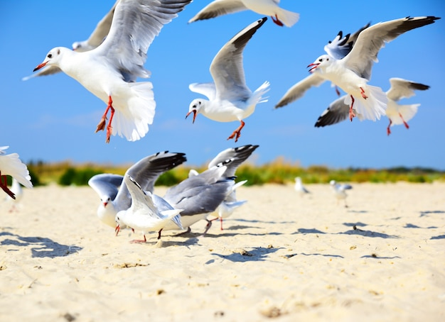 Flock of sea gulls flying over a sandy beach
