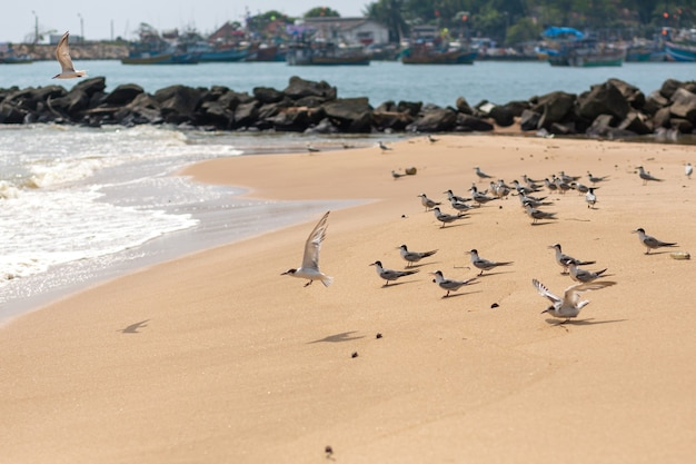 A flock of seagulls are hunting on the sandy shore.