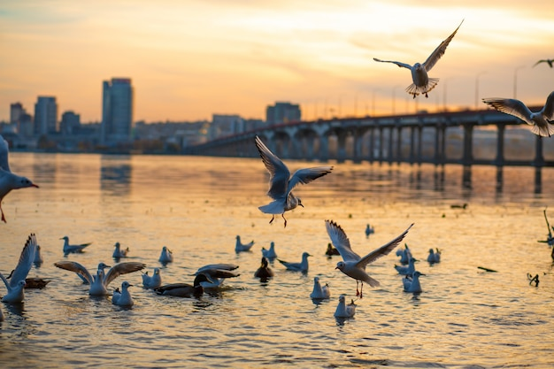 A flock of seagulls on the banks of the city river.