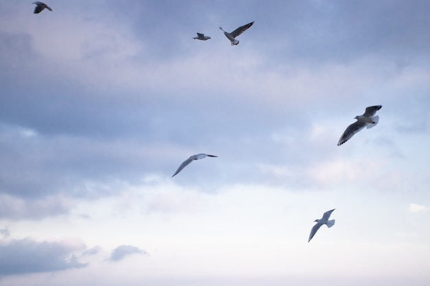 A flock of seagulls flying against the blue sky