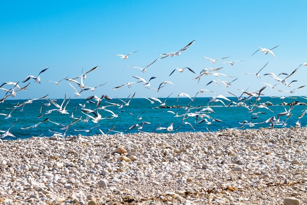 A flock of seagulls flying over a beach on a background of blue sea and sky.