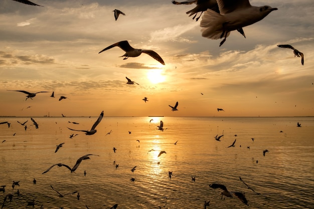 Flock of seagulls flying on sea gulf of thailand at evening