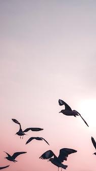Stormo di gabbiani che volano nello sfondo del cellulare del cielo