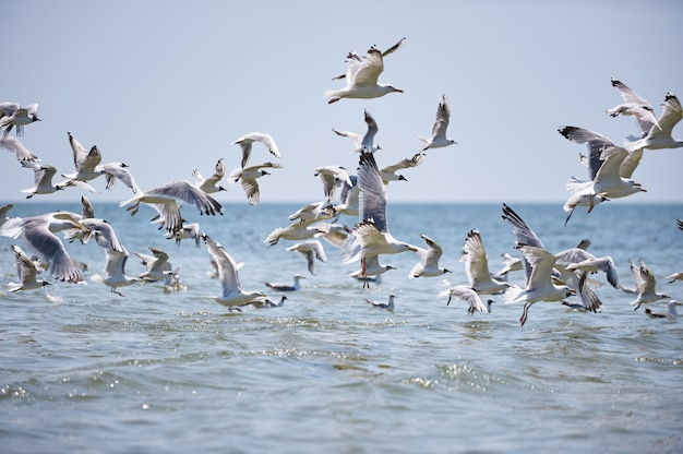 A flock of seagulls flying