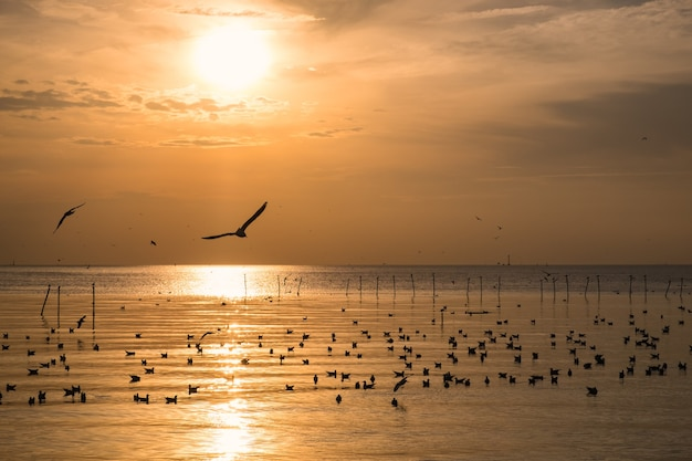 Flock of seagulls migrate on sea gulf of thailand in the evening