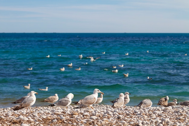 A flock of seagulls on a pebble beach on a background of blue sea and sky.