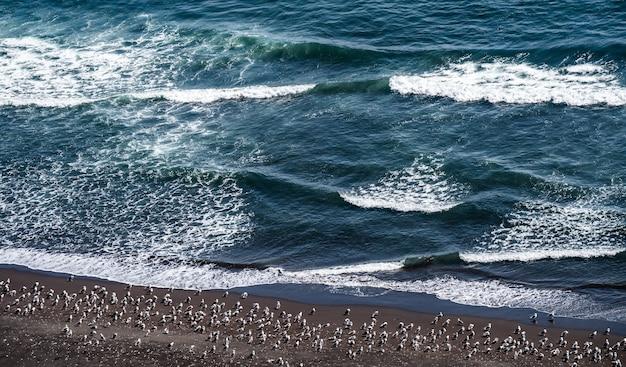 Flock of seagulls standing on mud land near sea shore.