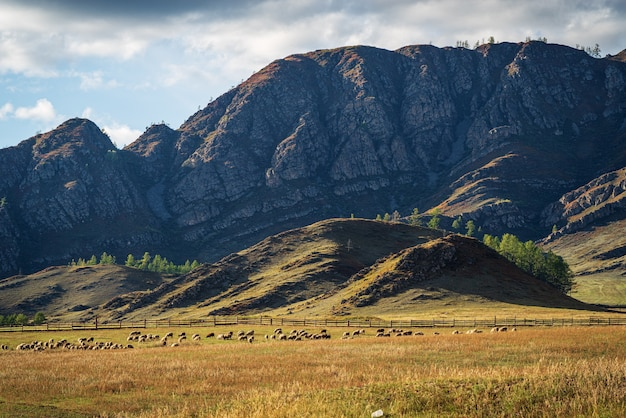 A flock of sheep grazes at the foot of the mountain