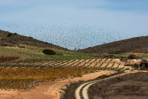 Flock of starlings migrating, heaven and earth