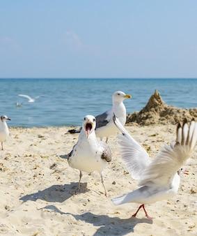 Flock of white gulls flies on the black sea shore