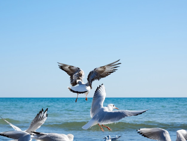 Flock of white gulls flies on the sea shore on a summer day