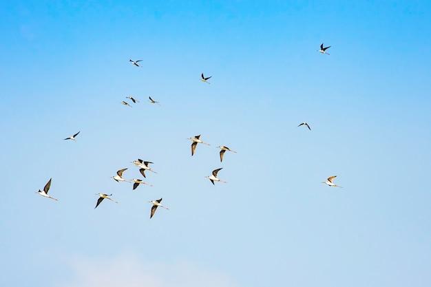 Flocks of birds flying in the sky.