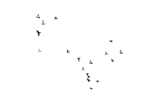白で隔離された飛んでいるハトの群れ。クリッピングパス。