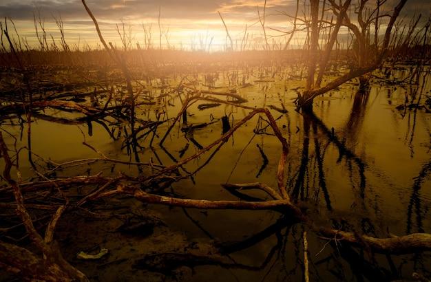 Проблемы паводковых лесов и мертвых деревьев из фона экологических тем об изменении климата