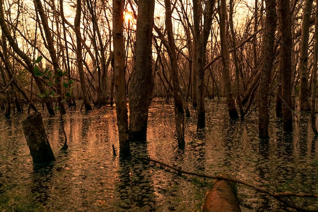 Flood forest and dead tree problems from climate change. environmental topics background. concept of save the earth from environmental crisis. dead trees in flood area with sunset sky. degraded forest