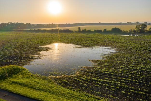 春の自然の中で植物が育つ浸水農地