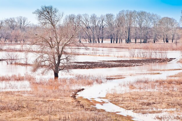 침수 된 들판. 봄 홍수 프리미엄 사진
