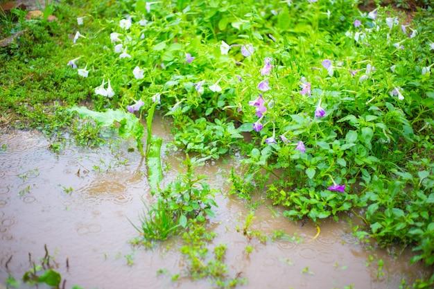 꽃이 만발한 정원. 웅덩이 사이로 비가 내리고 있습니다. 여름의 나쁜 날씨, 메조사이클론.
