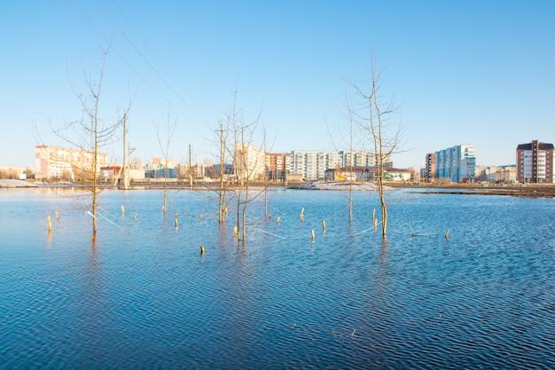 街の氾濫木々は水で氾濫している