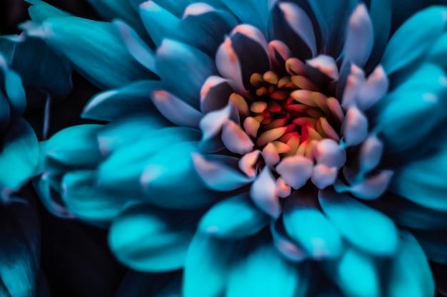 Брендинг и концепция любви флора синие лепестки цветов ромашки в цветении абстрактные цветочные цветы искусство фон ...