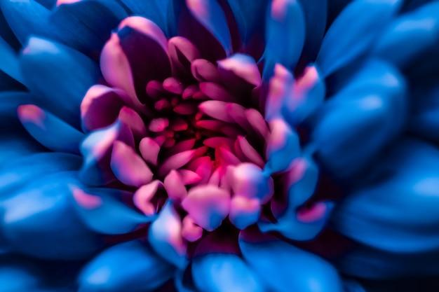 Брендинг флоры и концепция любви синие лепестки ромашки в цветении абстрактные цветочные цветы искусство фон ...