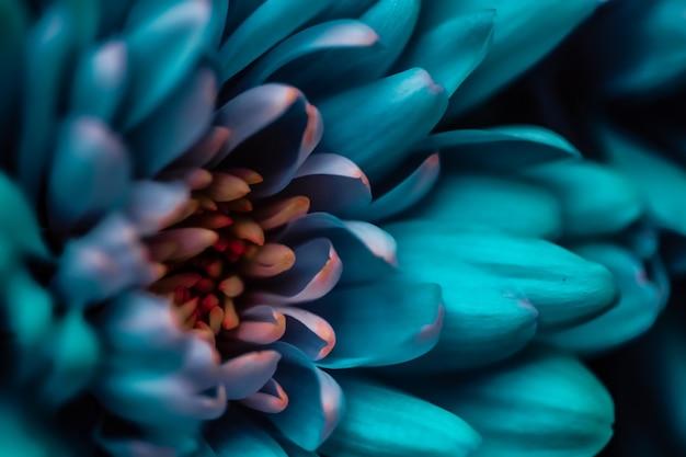 フローラブランディングと愛のコンセプトブルーデイジー花びらが咲く抽象的な花の花アート背景花の春の自然の香料の香りの結婚式高級美容ブランドの休日のデザイン