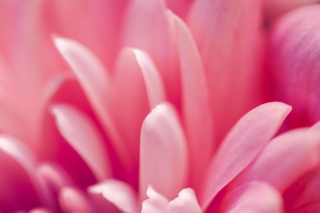 Брендинг флора и концепция любви коралловые лепестки ромашки в цвету абстрактные цветочные цветы искусство назад ...