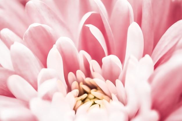 식물 브랜딩 및 사랑 개념 꽃 추상 꽃 꽃 예술 배경에서 핑크 데이지 꽃 꽃잎 ...