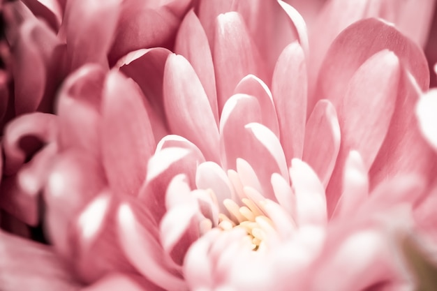 フローラブランディングと愛のコンセプトピンクのデイジーの花びらが咲く抽象的な花の花アートの背景...