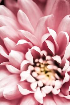 Брендинг флоры и концепция любви розовые лепестки ромашки в цветении абстрактные цветочные цветы искусство фон ...