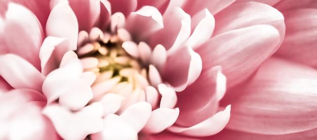 Брендинг флора и концепция любви розовые лепестки ромашки в цветении абстрактные цветочные цветы искусство фон ...