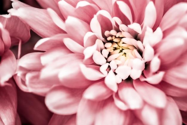 フローラ ブランディングと愛のコンセプト ピンクのデイジーの花の花びらが抽象的な花の花アートの背景に咲く春の自然の香り、結婚式の高級美容ブランド ホリデー デザイン
