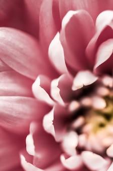 Флора брендинг и концепция любви розовая ромашка лепестки цветов в цвету абстрактные цветочные цветы искусство фон цветы весной природа для духов аромат свадьба роскошный бренд красоты праздник дизайн