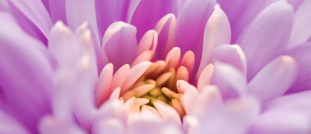 식물 브랜딩 및 사랑 개념 꽃 추상 꽃 꽃 예술 배경에서 보라색 데이지 꽃 꽃잎 ...