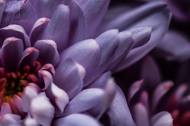 フローラブランディングと愛のコンセプト紫色のデイジーの花びらが咲く抽象的な花の花のアートバック...