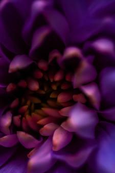 Флора брендинг и концепция любви пурпурные лепестки ромашки в цветении абстрактные цветочные цветы искусство бак ...