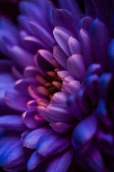 フローラ ブランディングと愛のコンセプト紫のデイジーの花の花びらが抽象的な花の花アートの背景に春の自然の中で花を咲かせ、香水の香りの結婚式の高級美容ブランドのホリデー デザインを表現します。