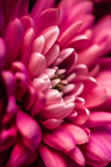 Брендинг и концепция любви флора красные лепестки цветов ромашки в цветении абстрактные цветочные цветы искусство фон ...