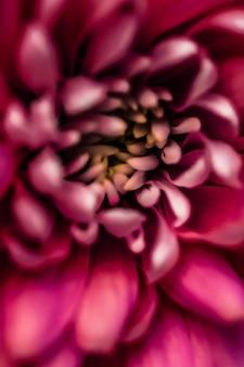 Брендинг и концепция любви флора красные лепестки ромашки в цветении абстрактные цветочные цветы искусство фон ...